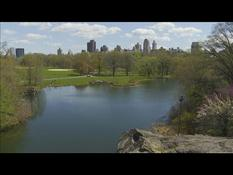 "During lockdown, Central Park helps New Yorkers stay ""sane"""